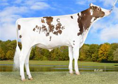 Picture for category Red Holsteins